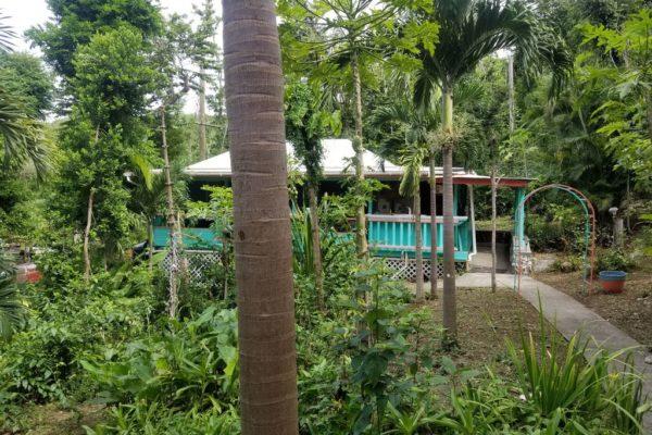 Peaceful-Cottages-Villas-Rain-Forest